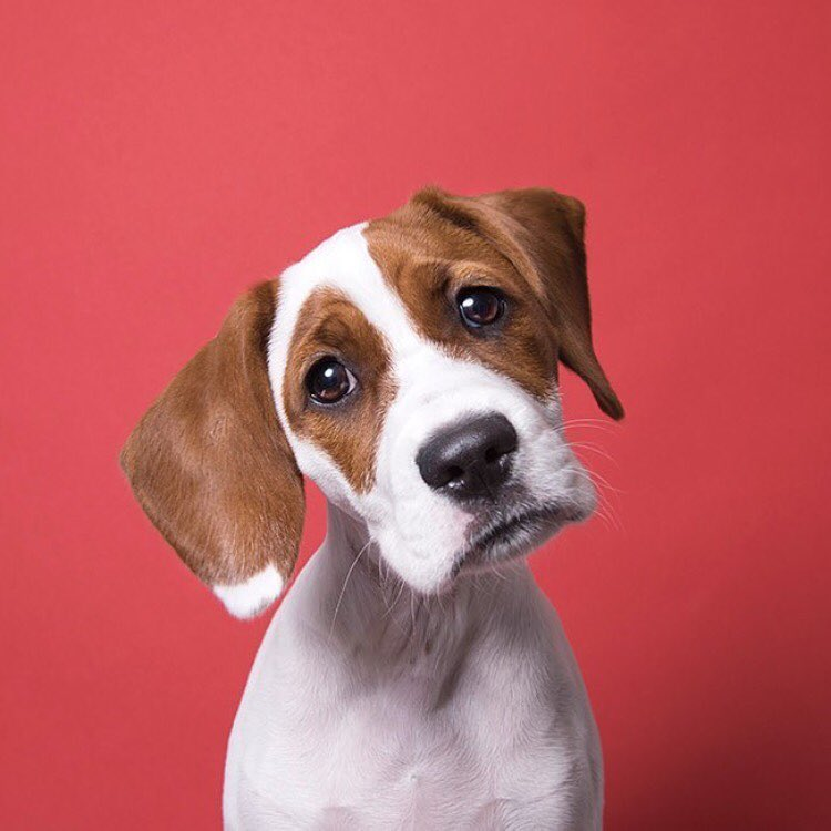 The 10 Most Dangerous Foods For Dogs
