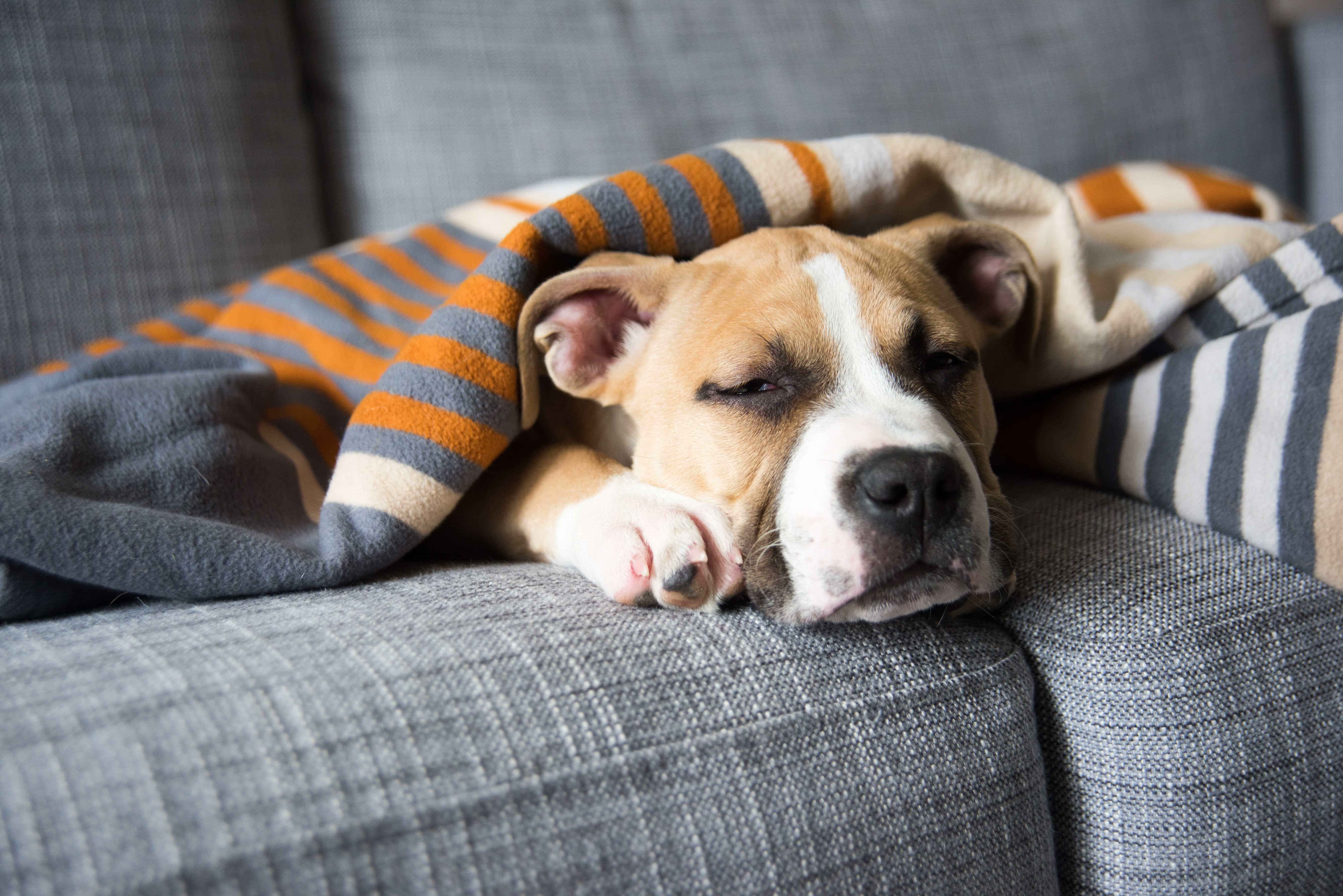Why Your Dog Is Vomiting And What To Do About It,What Is An Ionizer Do