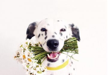 natural remedies for dogs with bad breath