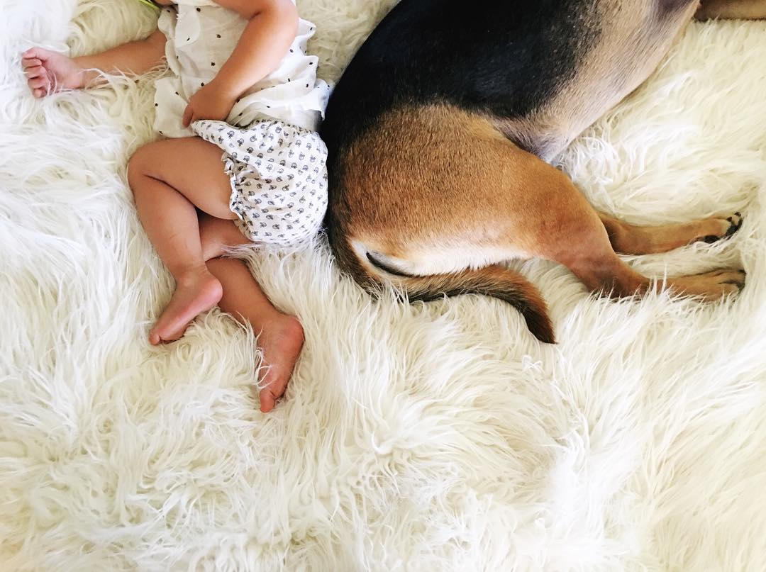 prepping your dog for a new baby