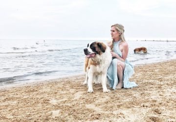 guide to adopting a dog