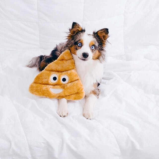 why do some dogs eat their own poop