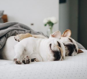 How Much Sleep Does Your Dog Really Need?