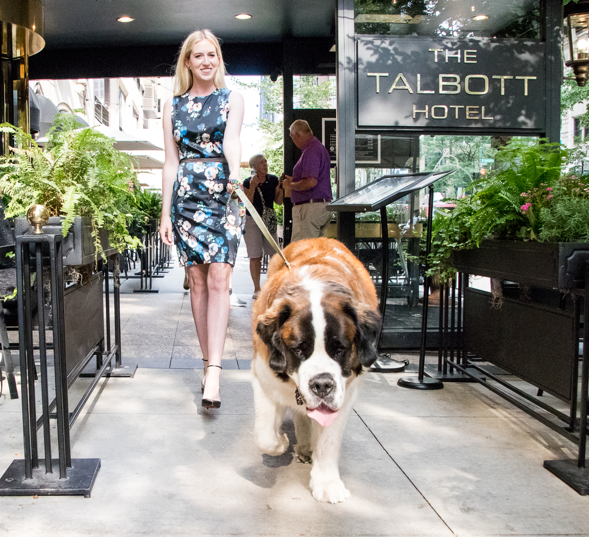 top dog friendly spots in chicago