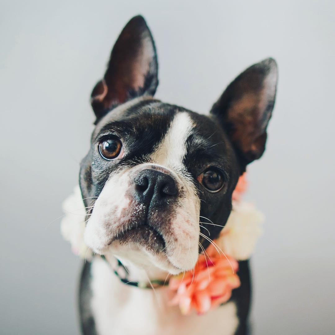 constipation in dogs