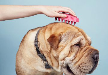 how to keep your dog's skin healthy