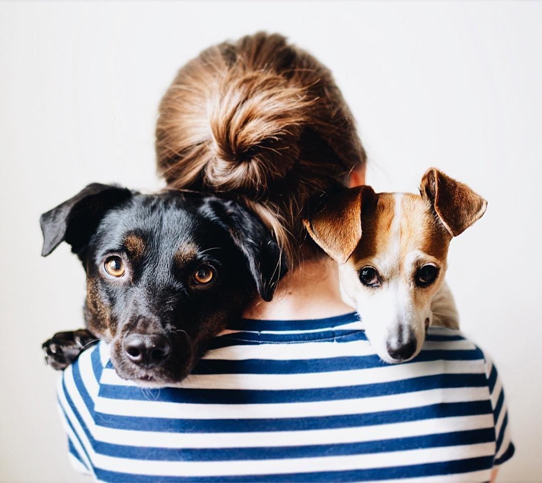what family means to your dog