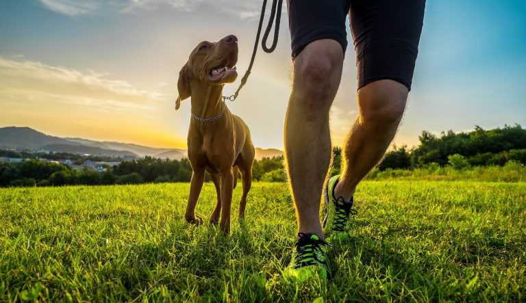 Dog running on grass | running with your dog