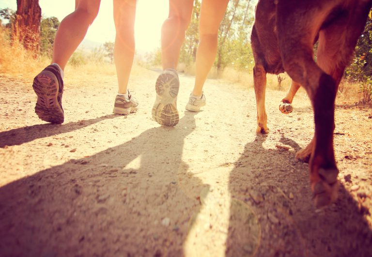 close-up of two humans running with a dog on sunny hiking trail | running with your dog