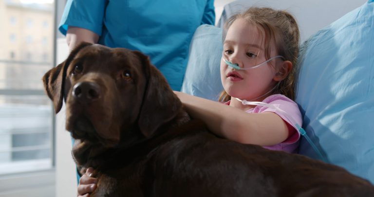 chocolate lab sitting in hospital bed being pet by a little girl who is a patient at the hospital