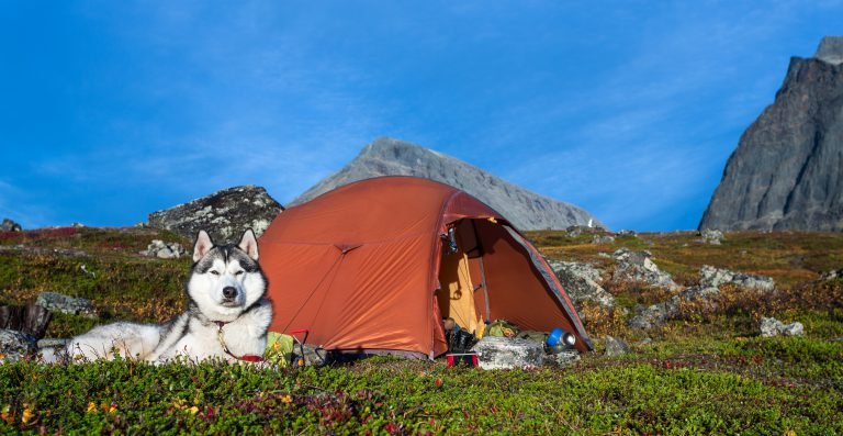 siberian husky sitting on the ground outside of a tent during a camping trip