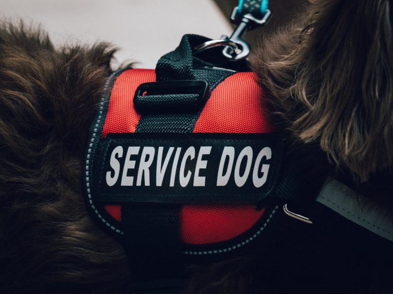 close-up photo of a red and black service dog vest